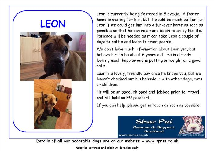 Shar Pei Rescue Leon